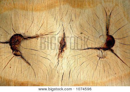 Tree Twin Stump