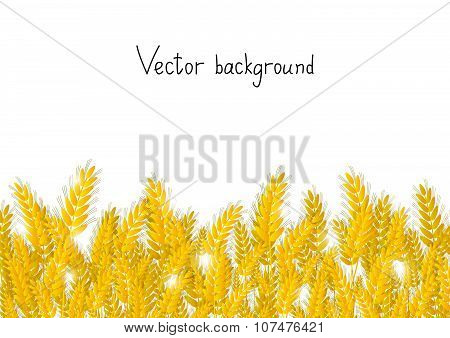 Wheat background with place for text