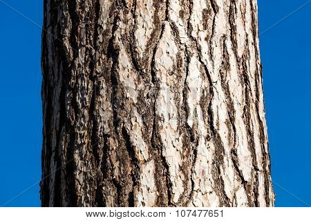 A close-up picture of a tree bark