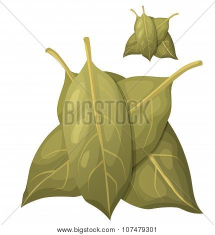 Bay leaves isolated on white background. Detailed Vector Icon