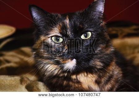 Expressive eyes portrait cat