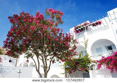 Building Of Hotel In Traditional Greek Style, Santorini Island, Greece