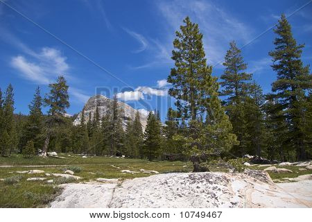 Pine trees with Lembert Dome, Yosemite