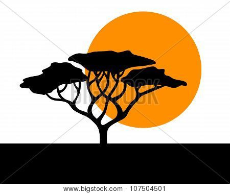 Vector african acacia background