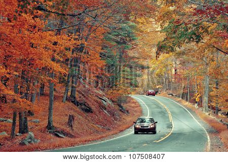 Autumn foliage in forest with road.