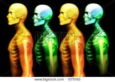 Man Bones