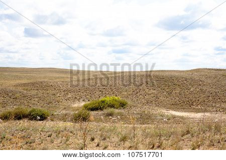 Summer Steppe Landscape