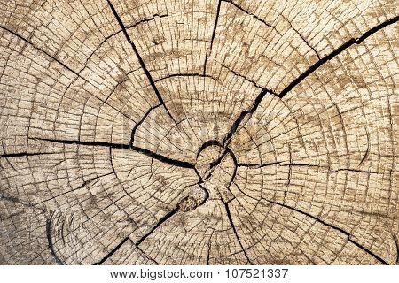 cut of log closeup with concentric rounds