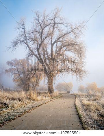 foggy November morning on bike trail  - Poudre River Trail near WIndsor, Colorado, fall scenery