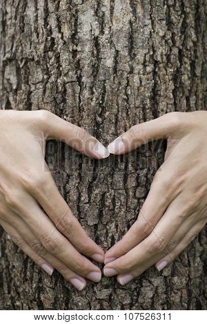 Woman's Hands Making A Heart Shape On A Tree Trunk