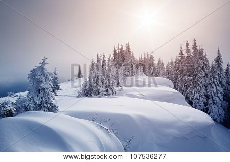 Winter forest covered with snow. New Year`s landscape. Fabulous trees in snowdrifts. Sunlight through the mist