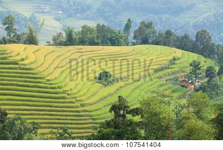 Typical image of an Asian village landscape in a rural area