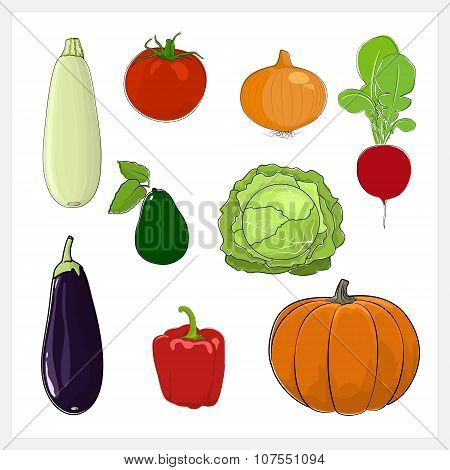 Set Of Vegetable  Isolated On White Background
