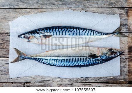 Two Raw Fresh Mackerel Fishes On A Paper