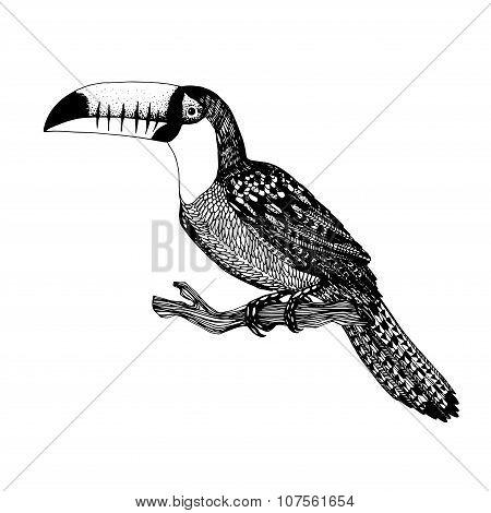 Vector Hand Drawn Bird