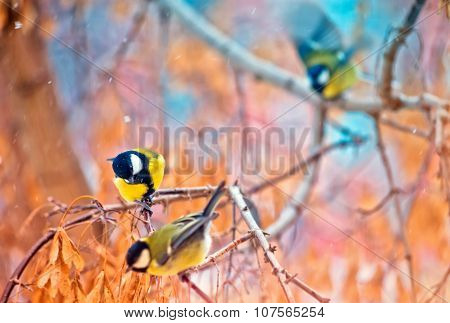 great titmouse on a branch
