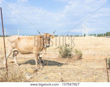 Bovine Turbines Country