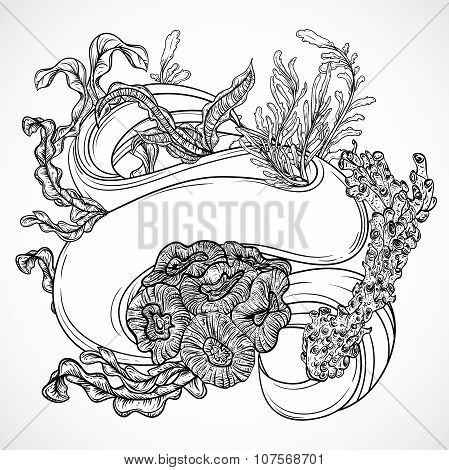 Collection of marine plants, seaweed, corals with ribbon banner. Vintage set of black and white hand
