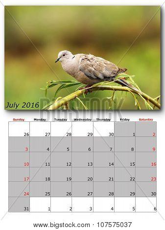 Garden Birds Calendar  July 2016