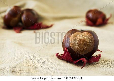 Chestnut On Red Leaf Close-up On Beige Cloth