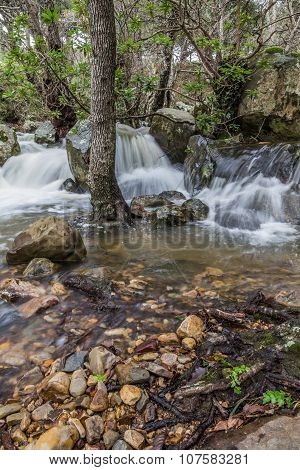 Forest at autumn with creek little cascades.