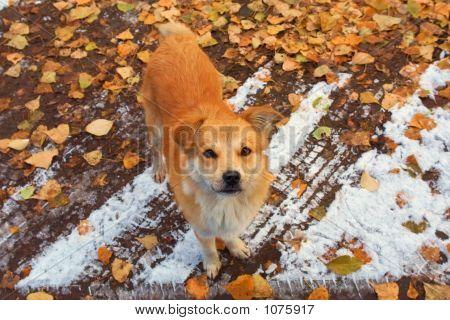 A Homeless Dog