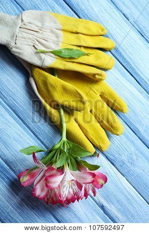 Yellow garden gloves and purple flower on blue wooden background