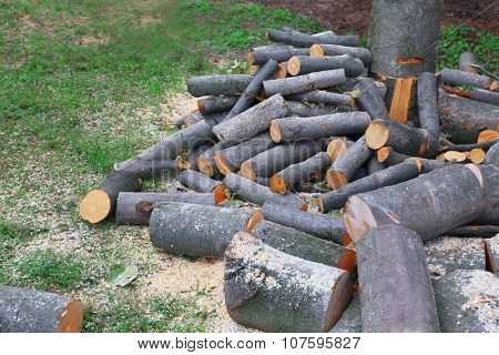 Cut firewood on grass