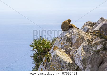 A pair of monkeys resting on the Rock of Gibraltar