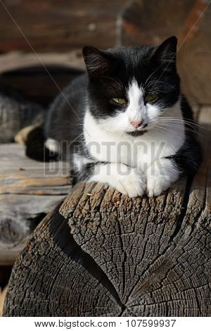Cat on the old log