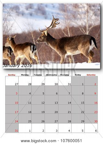 Wildlife Calendar January 2016
