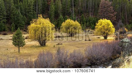 Panorama Of Trees In Autumn.