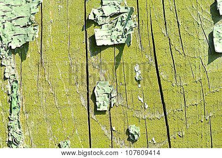 Old Oak Tree Bark Texture