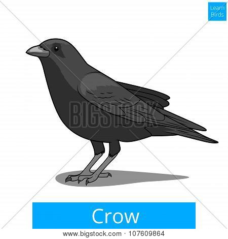 Crow learn birds educational game vector