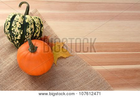 Harlequin And Small Orange Pumpkin With Maple Leaves