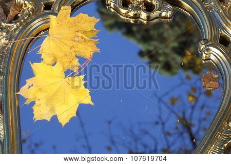 Autumn Leaves Of A Maple On A Mirror In Sky Reflexion