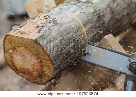 Working Saw And Log