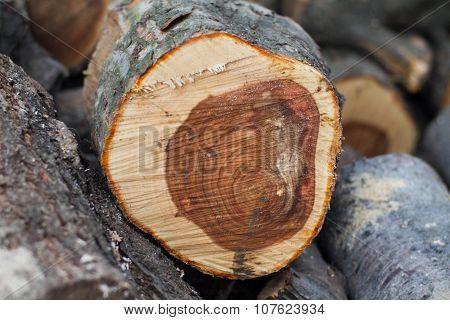Clolr Log