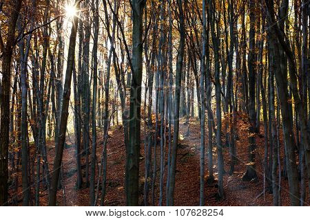Mystic Forest In The Light Of The Morning Sun