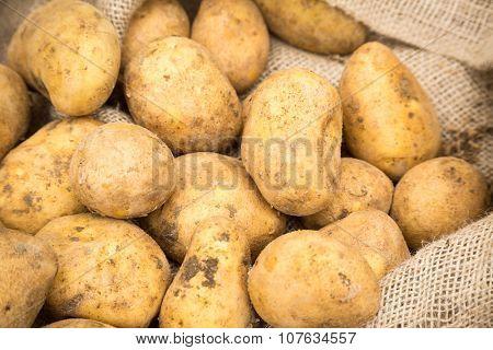 Dirty raw potatoes in burlap sack