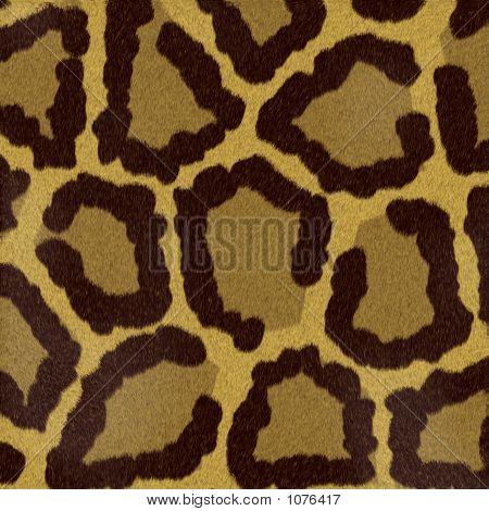 Textures Animal