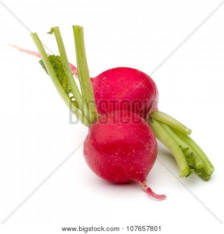 Small garden radish isolated on white background cutout
