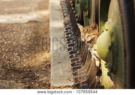kitten sitting on a tank