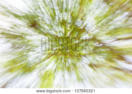Blurred Bokeh Photo Green Foliage In Forest Background.
