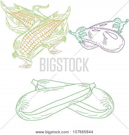 Set Drawn Dudovich Vegetables