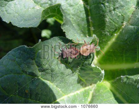 Love Garden-Bugs
