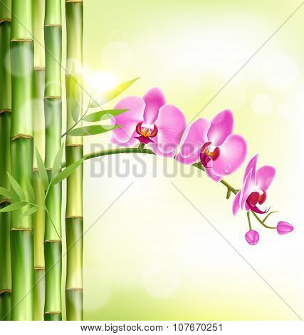 Orchid Pink Flowers With Bamboo And Sunlight On Light-green