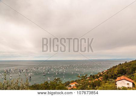 Barcolana Regatta Of Trieste