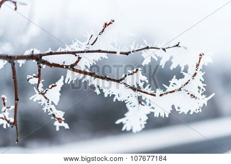 ice crystals on tree branches.