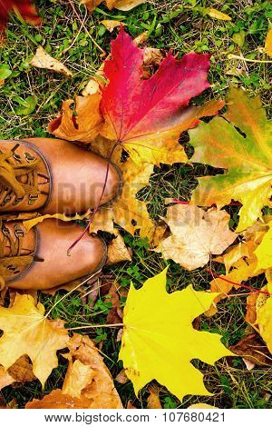Leather Boots With Colorful Maple Leaves.